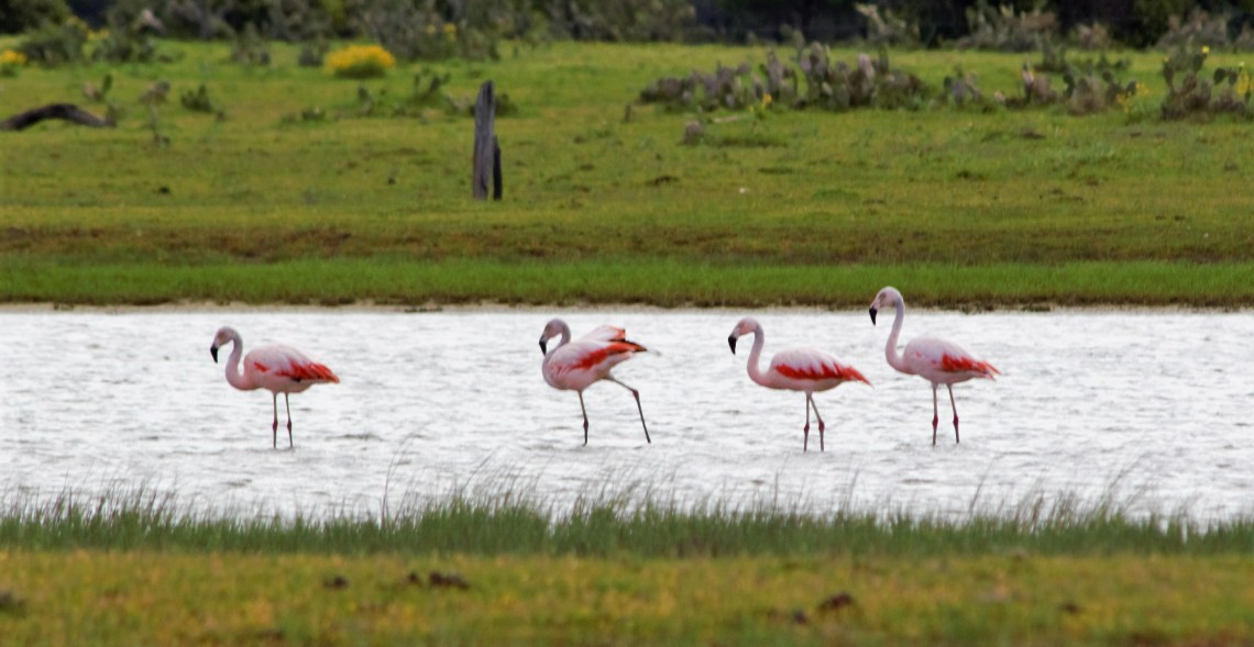 Flamingos 6
